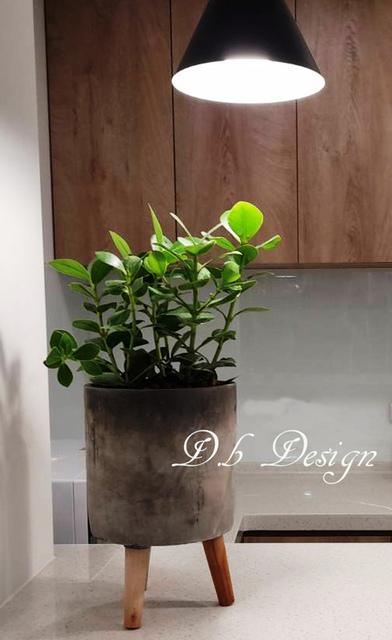 室內植物綠化 / 辦公大樓>休息區櫃台 - 室內植物綠化>辦公大樓