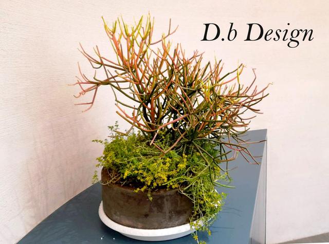 室內植物綠化 / 辦公大樓>大廳櫃台後側 - 室內植物綠化>辦公大樓