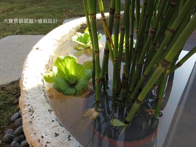 大寶園藝>水生植栽設計 - [ 透天頂樓篇4 ]-頂樓鋪設草皮.南方松格柵.洗手台