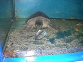 2009/12台南~鱷魚王:1353047360.jpg