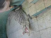 2009/12台南~鱷魚王:1353047368.jpg