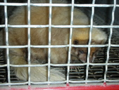 2009/12台南~鱷魚王:1353057065.jpg