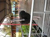 2009/12台南~鱷魚王:1353057066.jpg