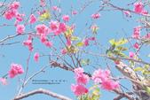 1051210_春櫻:PN_008_OK.jpg
