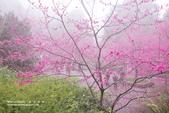 1060225_九族文化村_櫻花祭(雨天):9C_021.jpg