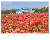 1051120_新社花海:SSF_018.jpg