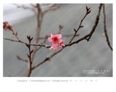 1051120_東勢林場:DL_011_OK.jpg