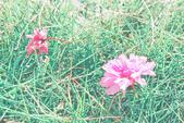 1051210_春櫻:PN_015.jpg