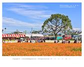 1051120_新社花海:SSF_005.jpg
