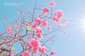 1051210_春櫻:PN_026_OK.jpg