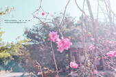 1051210_春櫻:PN_007.jpg