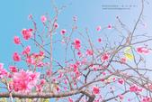 1051210_春櫻:PN_023_OK.jpg