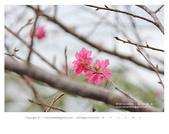 1051120_東勢林場:DL_016_OK.jpg