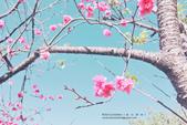 1051210_春櫻:PN_002.jpg