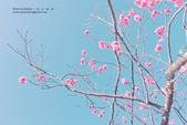1051210_春櫻:PN_004_OK.jpg