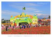 1051120_新社花海:SSF_009.jpg