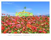 1051120_新社花海:SSF_017.jpg
