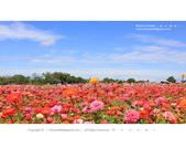 1051120_新社花海:SSF_020.jpg