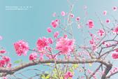 1051210_春櫻:PN_020_OK.jpg