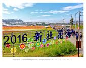 1051120_新社花海:SSF_001.jpg