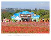 1051120_新社花海:SSF_010.jpg