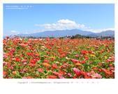 1051120_新社花海:SSF_016_OK.jpg