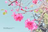 1051210_春櫻:PN_021_OK.jpg