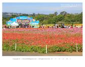 1051120_新社花海:SSF_011.jpg