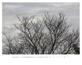 1051120_東勢林場:DL_004.jpg