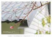 1051120_東勢林場:DL_010_OK.jpg