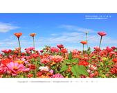 1051120_新社花海:SSF_021.jpg
