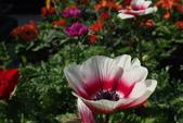 中社花園:P2050355.JPG