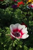 中社花園:P2050356.jpg
