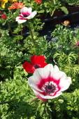 中社花園:P2050357.jpg