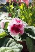 中社花園:P2050359.jpg