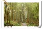 鹿谷-溪頭森林遊樂區:鹿谷-溪頭森林遊樂區(20081206a) 33