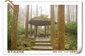 鹿谷-溪頭森林遊樂區:鹿谷-溪頭森林遊樂區(20081206a) 23