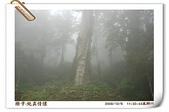 鹿谷-溪頭森林遊樂區:鹿谷-溪頭森林遊樂區(20081206a) 14