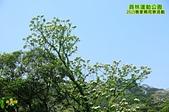 20150426 員林運動公園-2015客家桐花祭活動:_DSC8326.JPG