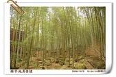 鹿谷-溪頭森林遊樂區:鹿谷-溪頭森林遊樂區(20081206a) 31