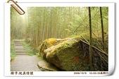 鹿谷-溪頭森林遊樂區:鹿谷-溪頭森林遊樂區(20081206a) 29
