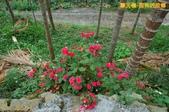 和平-摩天嶺-甜柿的故鄉(2011.09):和平-摩天嶺-甜柿的故鄉(201109) 04