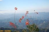 台中-大坑第四登山步道-頭嵙山(2011.01):大坑第四登山步道-頭嵙山 (2011.01) 06