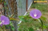 和平-摩天嶺-甜柿的故鄉(2011.09):和平-摩天嶺-甜柿的故鄉(201109) 16