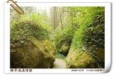 鹿谷-溪頭森林遊樂區:鹿谷-溪頭森林遊樂區(20081206a) 26