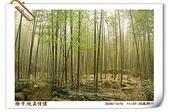 鹿谷-溪頭森林遊樂區:鹿谷-溪頭森林遊樂區(20081206a) 25