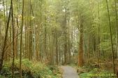 鹿谷-溪頭森林遊樂區:鹿谷-溪頭森林遊樂區 (20081206a) 33