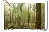 鹿谷-溪頭森林遊樂區:鹿谷-溪頭森林遊樂區(20081206a) 24