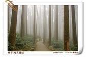 鹿谷-溪頭森林遊樂區:鹿谷-溪頭森林遊樂區(20081206a) 20