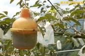 和平-摩天嶺-甜柿的故鄉(2011.09):和平-摩天嶺-甜柿的故鄉(201109) 11
